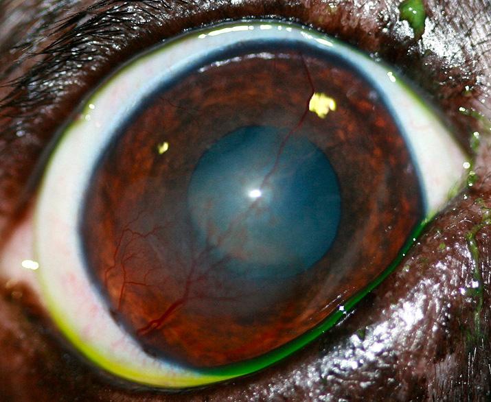 ojo-seco1-web