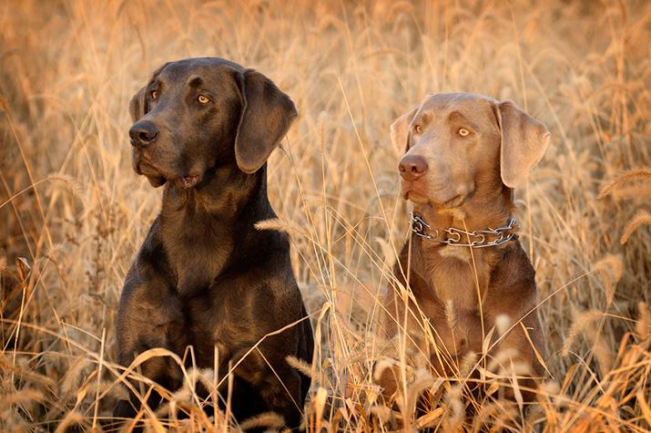 perros-oftalmologo