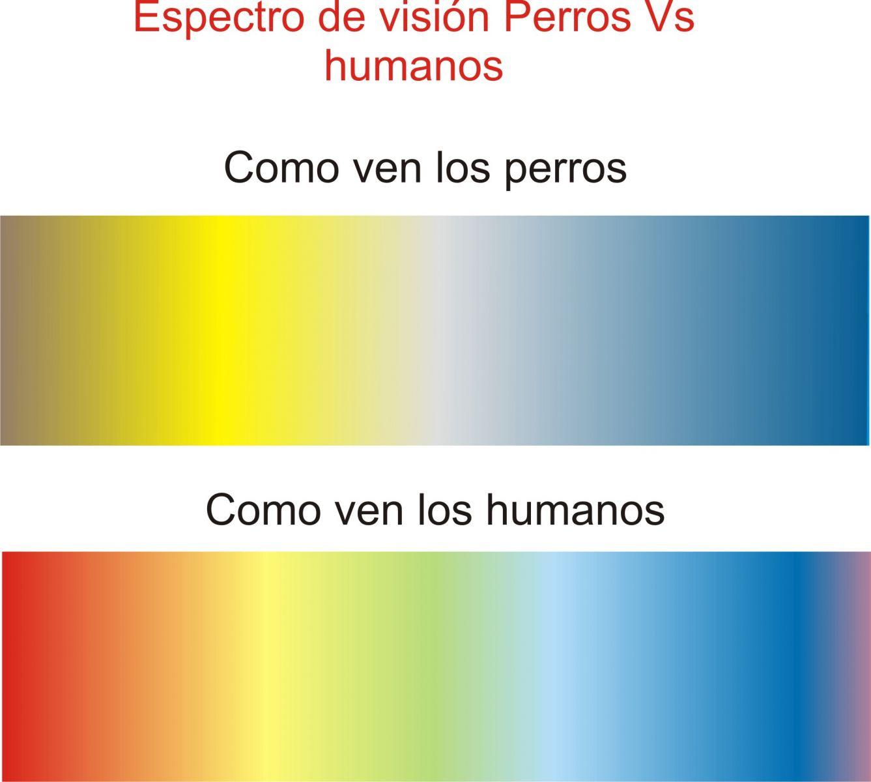 espectro de visión humanos vs perros
