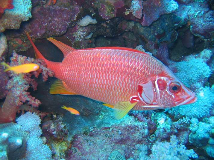 Los peces duermen con los ojos abiertos al no tener párpados