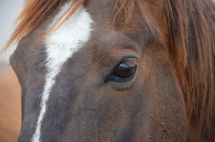ojo-caballo