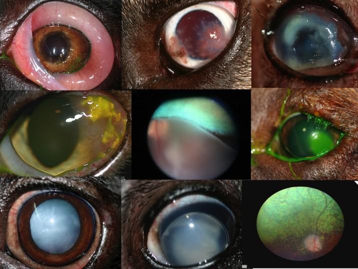 Curso Exploración oftalmológica IVO