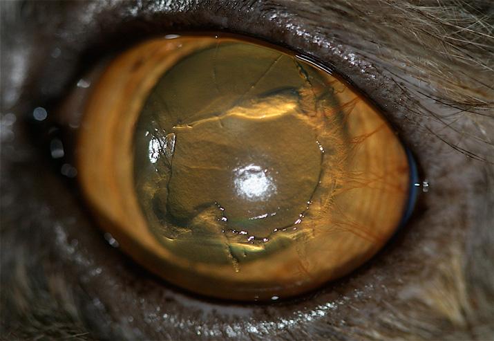 ulcera corneal indolente