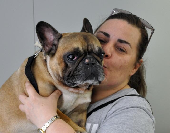 Bulldog francés con herida en el ojo