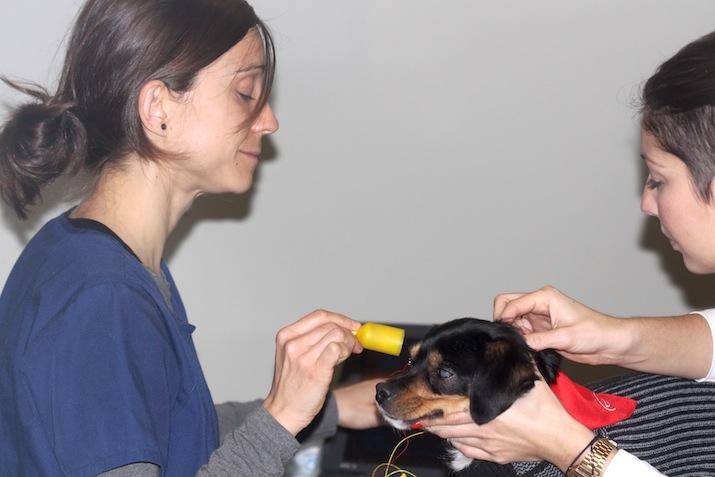 Electroretinografia perro con catarata