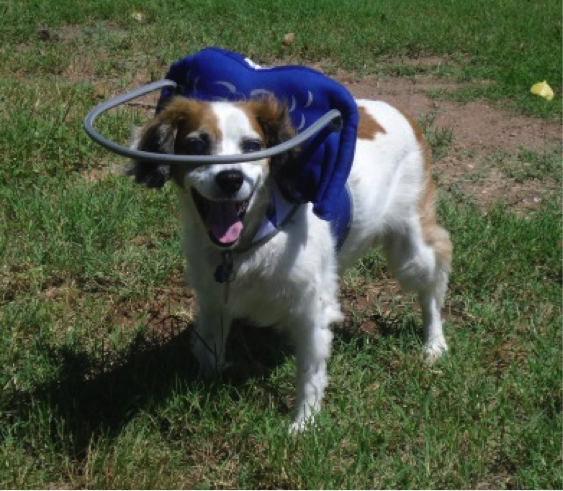 Arnés perro ciego