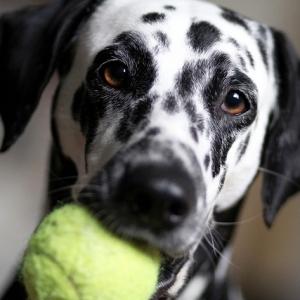 Operar a un perro de cataratas mejora su salud y calidad de vida