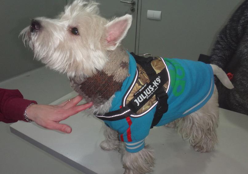 Revisión post cirugia perro cataratas nistagmo microftalmia