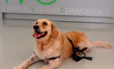 Perro con tumor ocular (caso Ona)