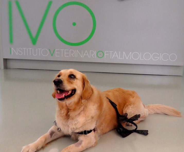 Extirpacion tumor ocular perro (caso Ona)