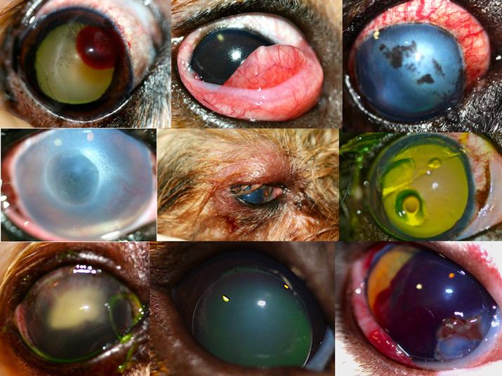 Ejemplos de casos del curso de urgencias oftalmológicas