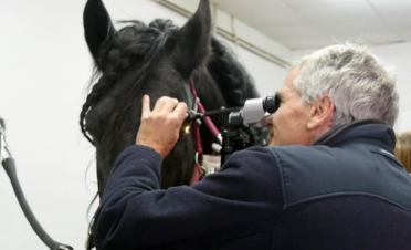 Paco Simó explora a un caballo con herida en la córnea