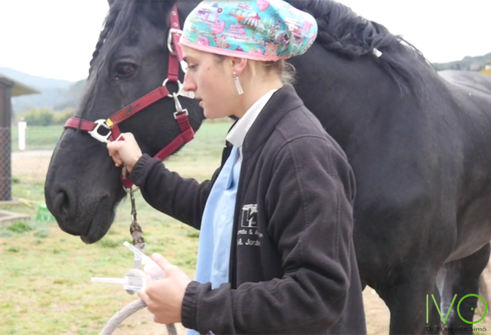 caballo-perforacion-corneal