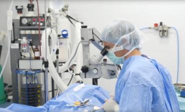 Cirugia transplante cornea caballo