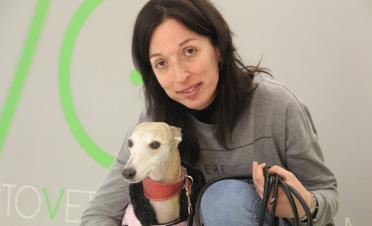 Caso cirugia en ojo seco perro