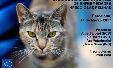 Curso manifestaciones oculares de enfermedades infecciosas felinas