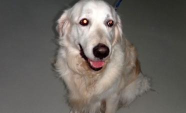 Caso tumor palpebral en perro