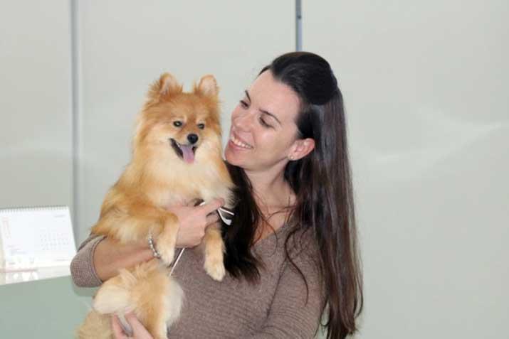 Perro con queratoconjuntivitis seca post cirugía