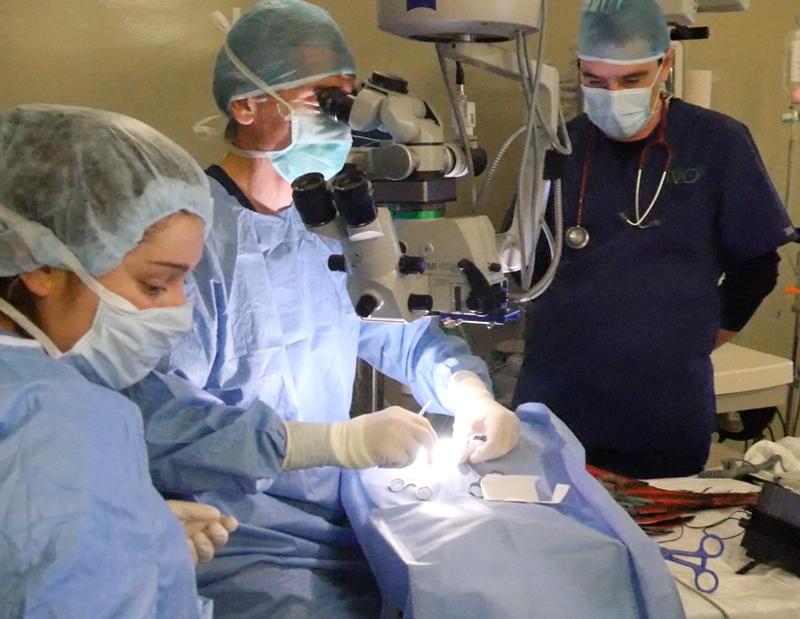 Cirugía de cataratas en un pájaro