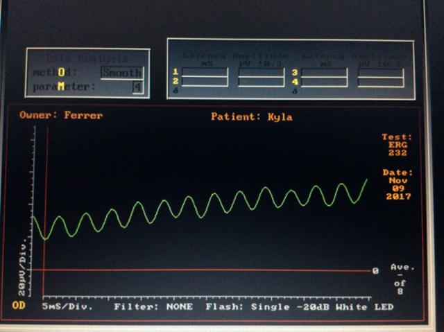 Electrorretinografía de un perro sin respuesta de células fotoreceptoras ni bipolares