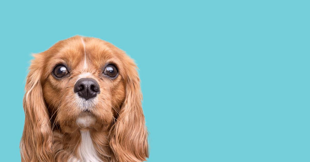 """<h2><a title='""""Los' delicados ojos del bulldog francés"""" href='""""https://ivoft.com/blog/infecciones-oculares-toma-de-muestras-diagnostico-y-tratamiento/"""">«Hay' que luchar siempre por recuperar la visión afectada por una infección ocular»</a></h2> <p><a class='""""link""""' title='""""Infórmate""""' href='""""https://ivoft.com/blog/infecciones-oculares-toma-de-muestras-diagnostico-y-tratamiento/"""">Conclusiones' curso Infecciones Oculares</a></p>"""