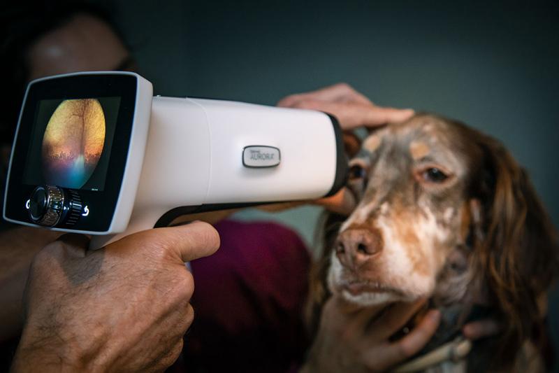 Toma de imágenes de retina mediante el retinógrafo ocular