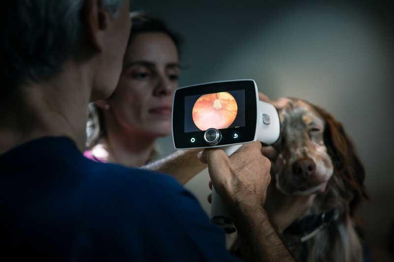 Retinografía ocular