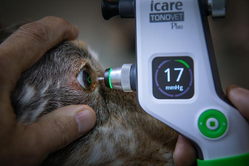 Medición de la presión intraocular por rebote mediante el Tonovet.