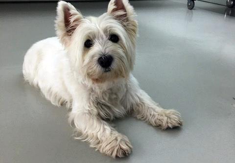 Caso Ricketsia-Erlichia en perros