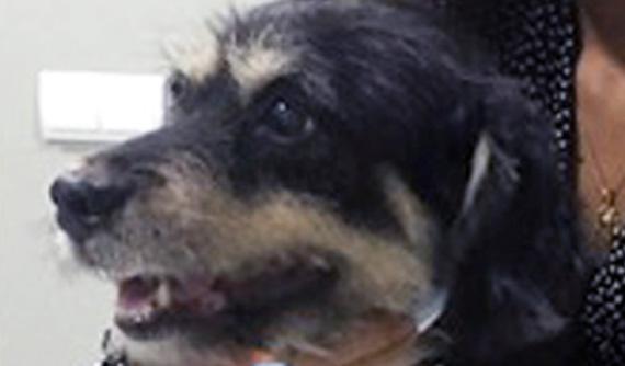 Caso glaucoma en perro