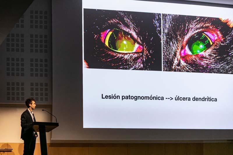 Ponente Curso Oftalmología veterinaria IVO - Infecciones oculares. Casos clínicos