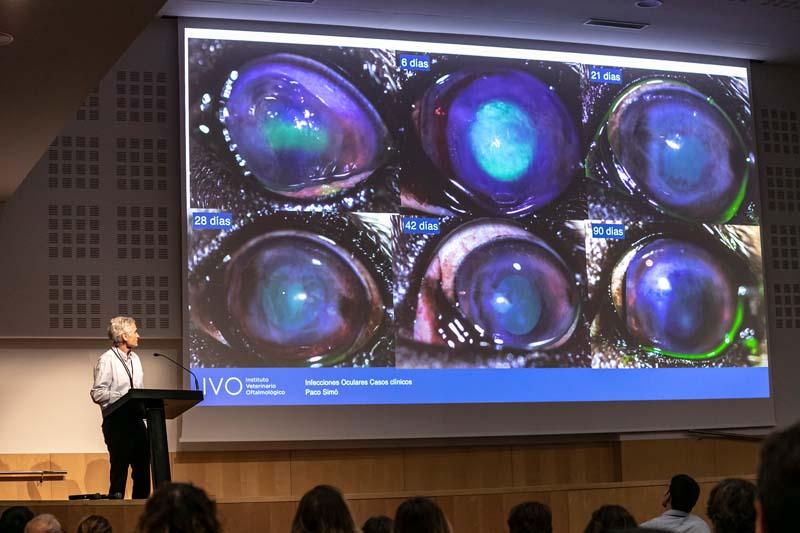Paco SImó en Curso Oftalmología veterinaria IVO - Infecciones oculares. Casos clínicos