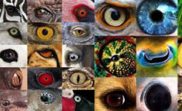 La visión de los animales