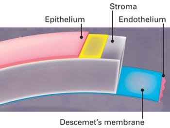 Capas de la córnea