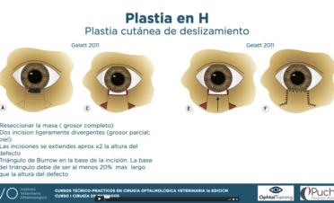 Curso 1 - Cirugia párpados - Programa cirugía oftalmológica veterinaria