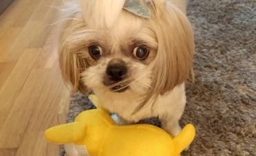 Kira tras su cirugía de trasplante de córnea, totalmente recuperada