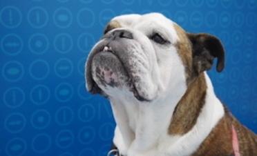 Brutus varios meses después de la intervención
